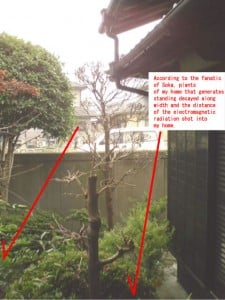 Garden tree that causes necrosis by electromagnetic radiation
